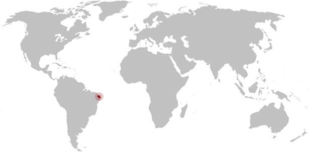 Landkarte Lasiodora parahybana-