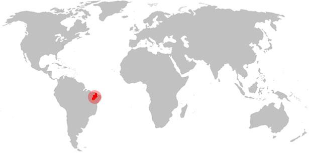 Weltkarte Nhandu chromatus